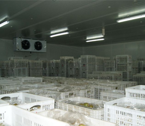 上海蔬菜冷庫廠家