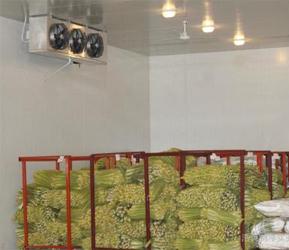 上海蔬菜氣調庫